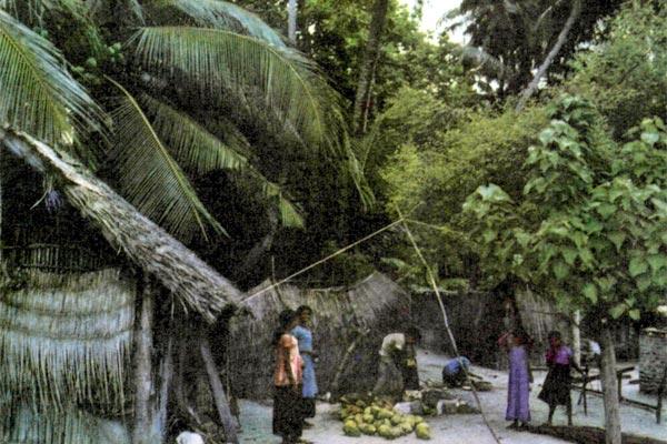 Фото №1 - Тайна тысячи островов