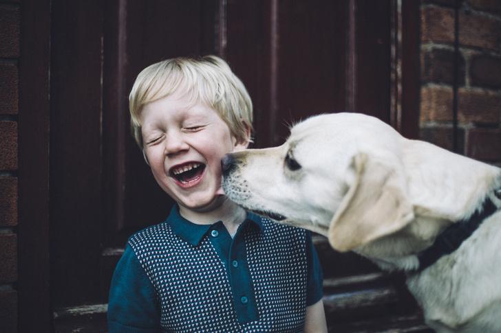 Фото №4 - 30 фактов о собаках, которые вы могли не знать