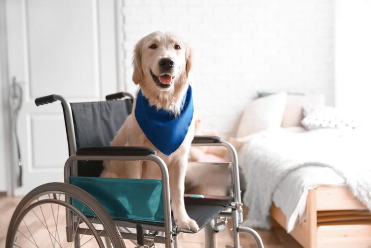 Фото №1 - Пёс завалил все тесты на звание собаки-поводыря, но это не помешало ему стать всеобщим любимцем (видео)