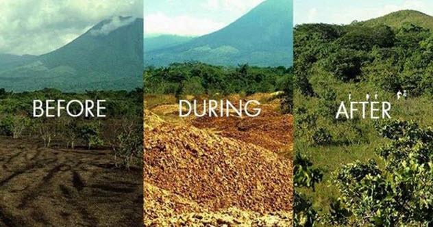 Фото №4 - 5 безумных идей для защиты природы, которые сработали