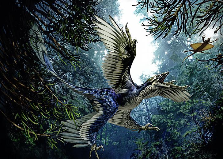 SPL/ LEGION-MEDIAПернатый динозавр микрораптор