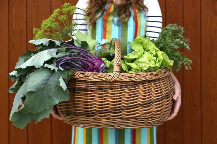 Фото №1 - Вегетарианство и полезное питание вредны для экологии