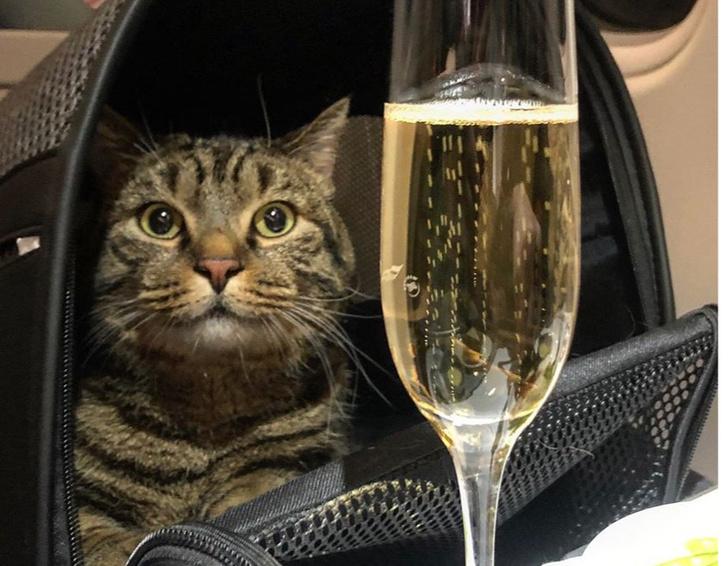 Фото №1 - Толстого кота не пускали в салон самолета, но его хозяин придумал гениальный лайфхак