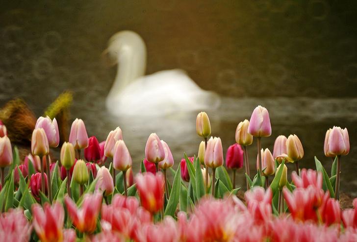 Фото №13 - Нескучный сад