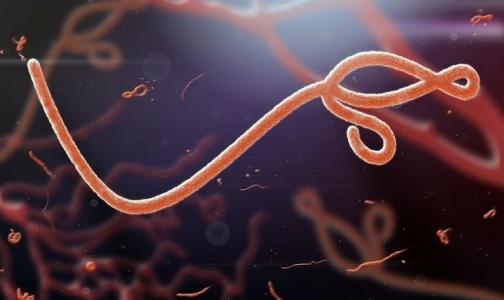 Фото №1 - Лихорадка Эбола добралась до Японии?