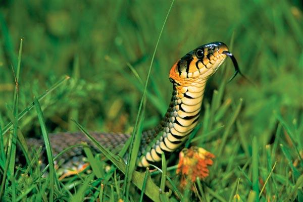 Фото №1 - Самый добрый змей