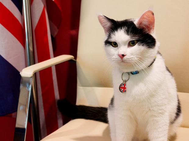 Фото №13 - Коты на службе Ее Величества