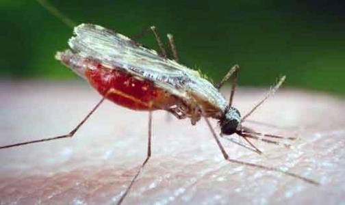 Фото №1 - ВОЗ оценивает борьбу с тропическими болезнями в $34 млрд