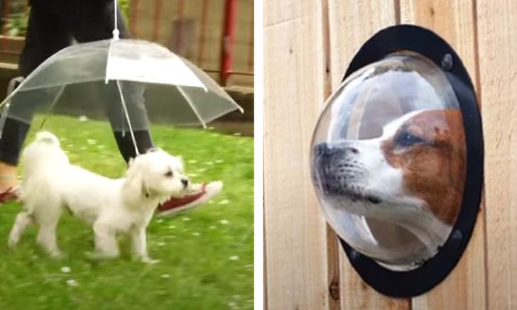 Фото №1 - 8 лучших изобретений для владельцев собак