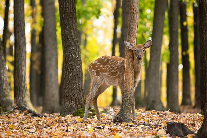 Фото №6 - Фотогалерея: лесные истории