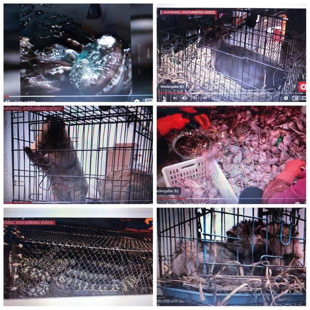 Фото №2 - В Сети появились фото и видео с того самого рынка в Ухане, откуда, возможно, начался коронавирус