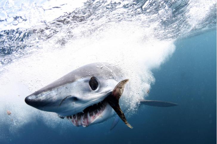 Фото №1 - Охота в подводном мире