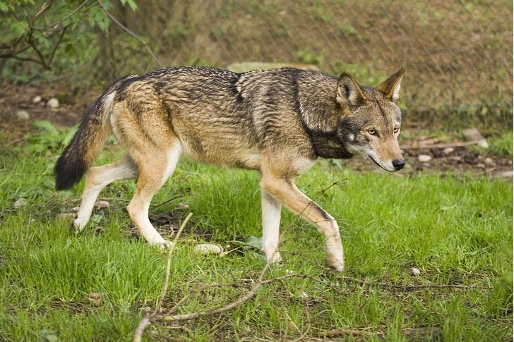 Фото №4 - На грани вымирания: 5 самых редких животных планеты