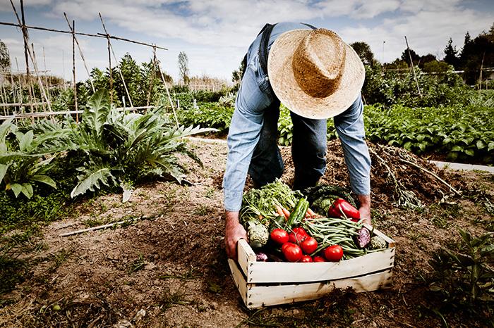 Фото №4 - Натуральные продукты: правда и мифы!