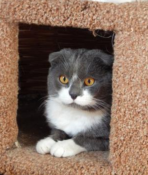 Фото №2 - Котопёс недели: кот Зорро и собака Адель