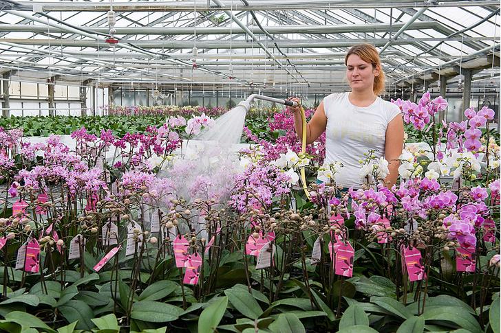 Фото №3 - Ботаника: прекрасные мошенницы