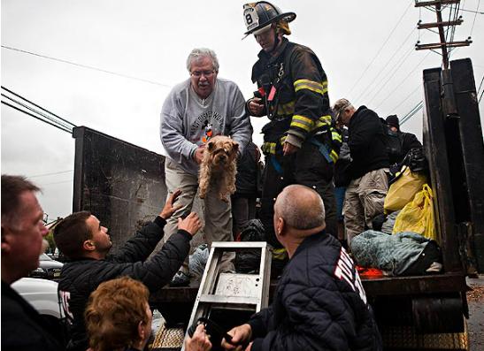Фото №1 - Ураган «Сэнди»: спасатели прилагают все усилия по поиску домашних питомцев