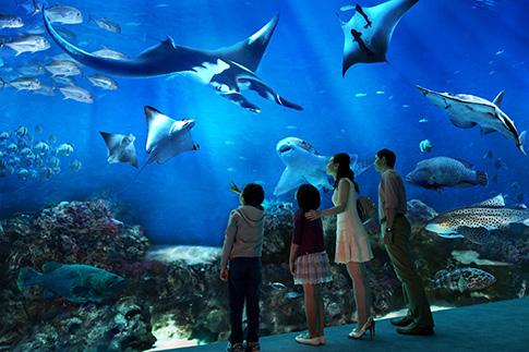Фото №4 - Детские каникулы: отдых в Сингапуре