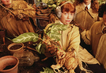Как выглядят анчар, мандрагора и другие таинственные растения, которые ты встречал в книгах