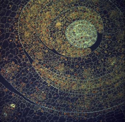 Фото №6 - Жизнь под микроскопом: семь фотографий