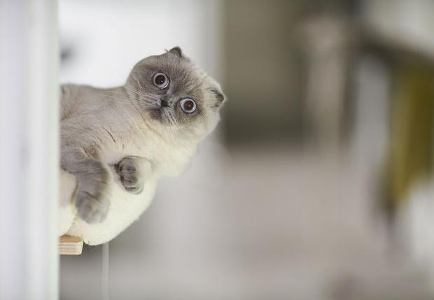 Фото №1 - В Китае из-за коронавируса запретили есть собак и кошек
