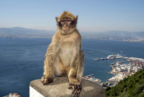 Фото №1 - Где в Европе можно встретить обезьян?