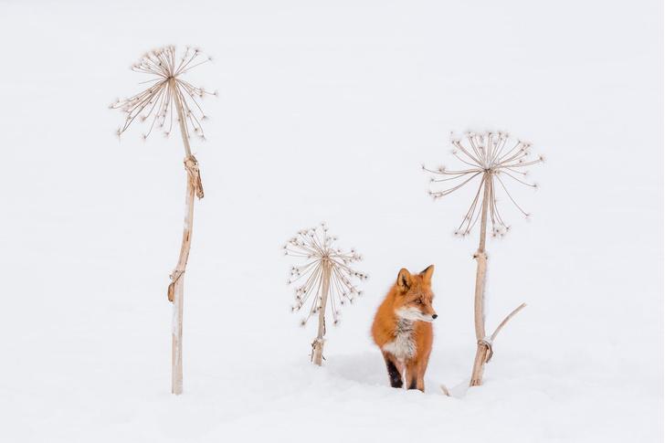 Фото №1 - Продолжается прием работ на IV фотоконкурс РГО «Самая красивая страна»