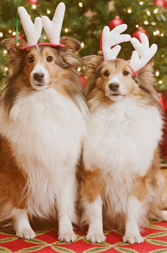 Фото №6 - Вырядился: забавные новогодние наряды домашних питомцев