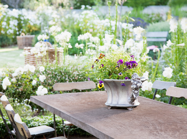 Фото №1 - Вечное лето: 5 долгоцветущих растений для сада