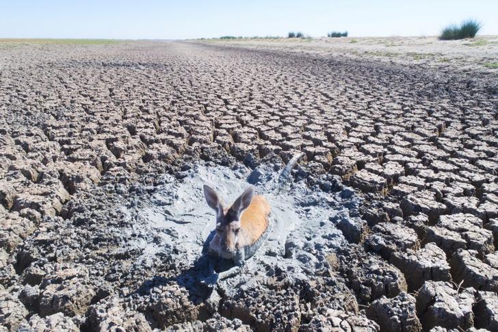 Фото №1 - Беспощадная засуха