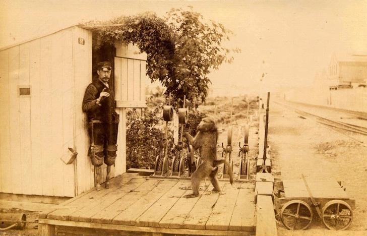 Фото №1 - Бабуин на службе Её Величества: история одного фото из Южной Африки