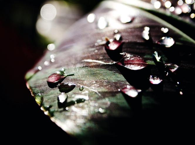 Фото №1 - Аромат природы: лучшие травяные парфюмы лета