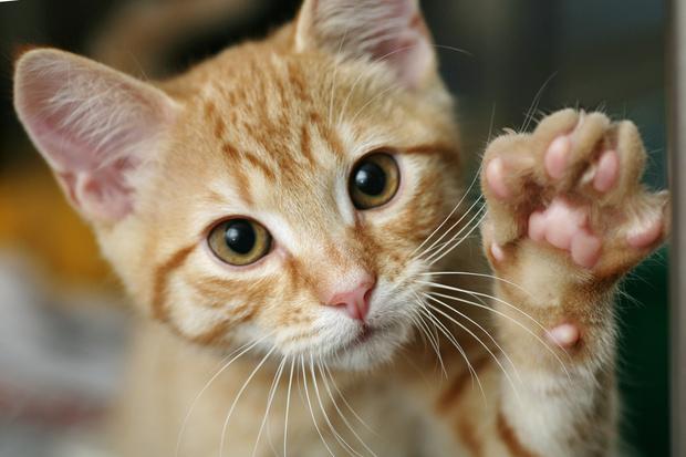 Фото №2 - 12 лучших анекдотов про котиков всех времен