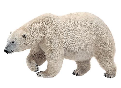 Фото №4 - Таня и медведи: как укротить зверя