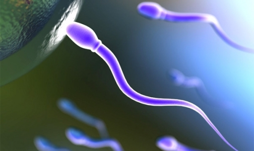 Фото №1 - Японские ученые вырастили искусственные сперматозоиды!