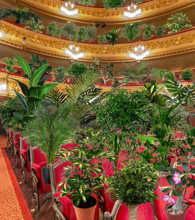 Фото №4 - В Барселоне устроили концерт для растений