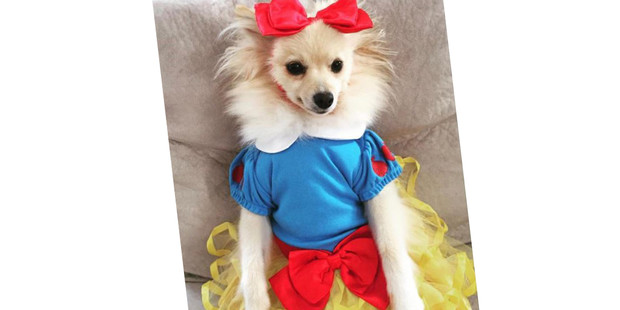 Фото №16 - 20 очаровательных собак в костюмчиках по мотивам мультфильмов Disney