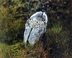 Фото №3 - Заповедная осень на Врангеле