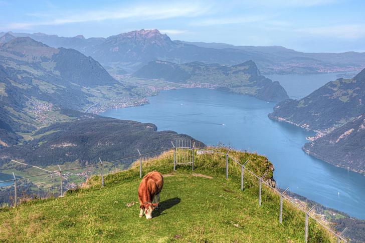 Фото №1 - В Швейцарии обнаружено 3000-летнее затонувшее поселение
