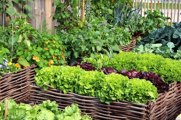 Фото №3 - Не уживутся: какие растения нельзя сажать по соседству