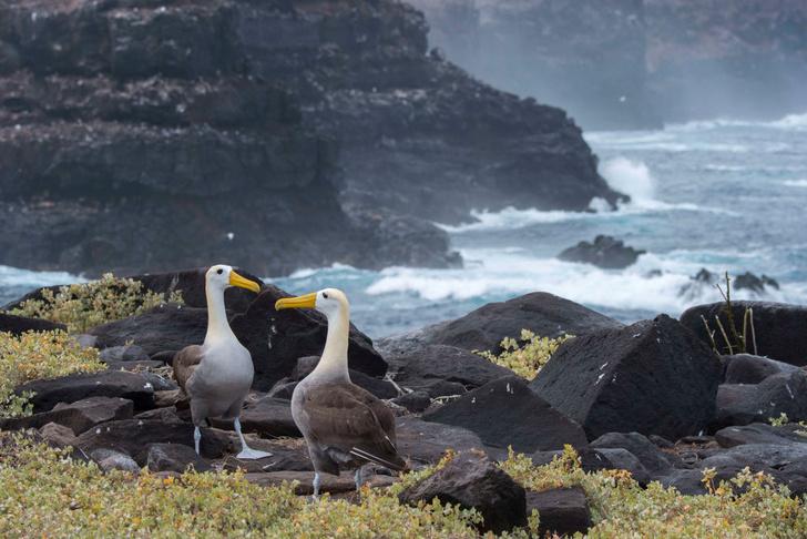 Фото №11 - Жемчужина Южной Америки: Эквадор в 11 фотокарточках