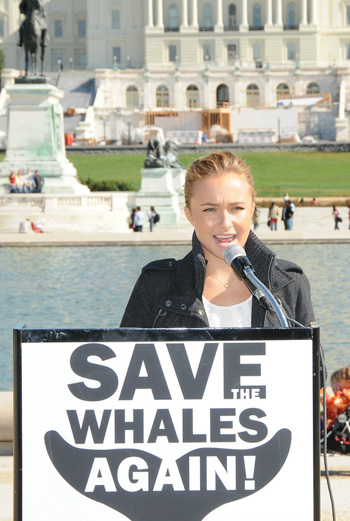 Фото №1 - Хэйден Панеттьери снова спасает китов
