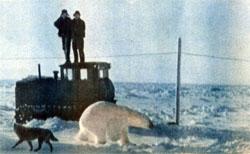 Фото №3 - Белые медведи живут рядом