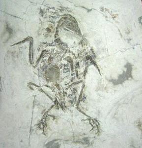 Фото №1 - Птицы возникли 100 млн лет назад