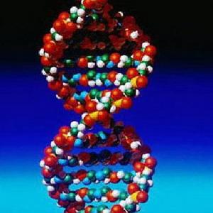 Фото №1 - База данных ДНК для преступников