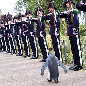 Фото №1 - Пингвин Королевской гвардии