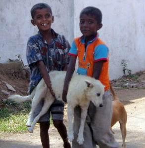 Фото №1 - Полиция Шри-Ланки возьмет собак на службу напрокат