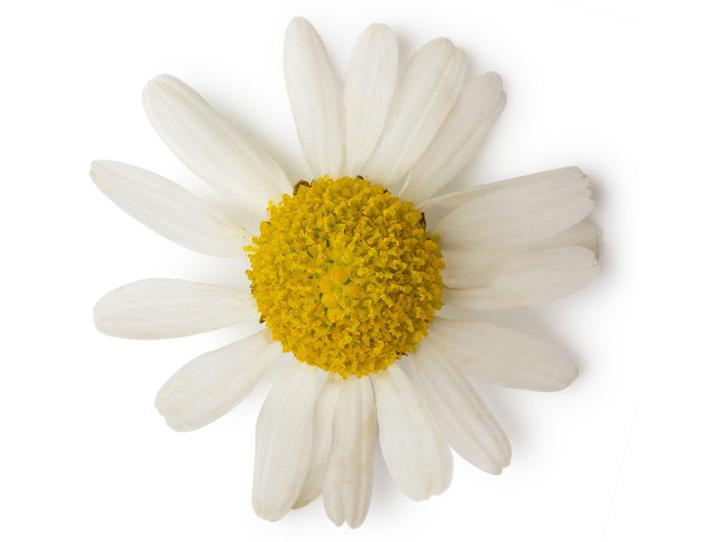 Фото №3 - Разбитое сердце: какой аромат поможет пережить расставание?