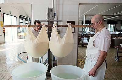 Фото №10 - Как и где делают настоящий пармезан
