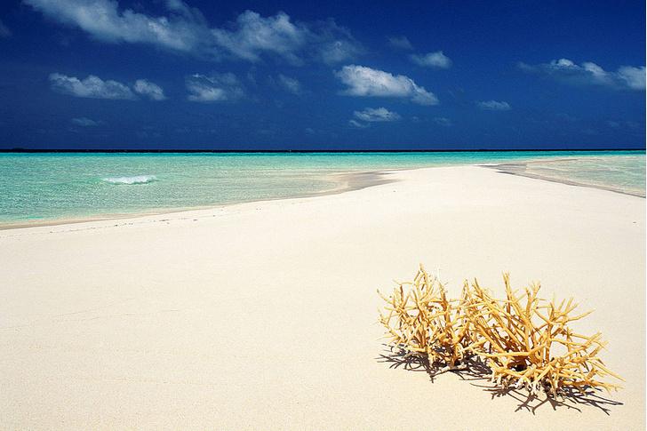 Фото №4 - Национальное достояние: каменные джунгли на Мальдивах